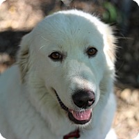 Adopt A Pet :: Lucy Lu - Austin, TX