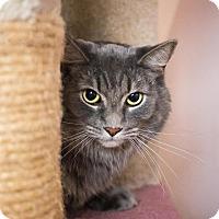 Adopt A Pet :: Jason - Sterling Heights, MI