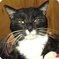 Adopt A Pet :: Checkers - Reeds Spring, MO