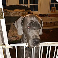 Adopt A Pet :: Phoebe - Charlestown, RI