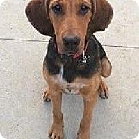 Adopt A Pet :: Cletus~meet me! - Glastonbury, CT