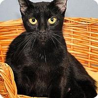 Adopt A Pet :: Allie - Gatineau, QC