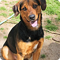 Adopt A Pet :: Monte *foster me - Richmond, VA