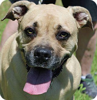 Boxer Mix Dog for adoption in Newport, North Carolina - Bailey