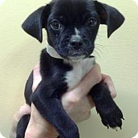 Adopt A Pet :: Jack and Jill