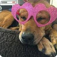 Adopt A Pet :: Fran - Lebanon, ME