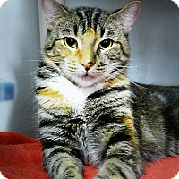 Adopt A Pet :: Anna - Casa Grande, AZ