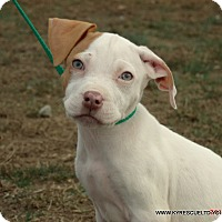 Adopt A Pet :: FROTOE - parissipany, NJ