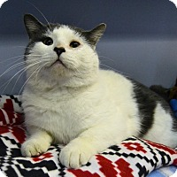 Adopt A Pet :: Tom - Michigan City, IN