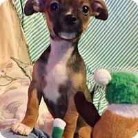 Adopt A Pet :: Penelope (BH) - Santa Ana, CA