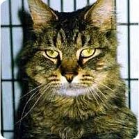 Adopt A Pet :: Matty - Medway, MA