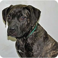 Adopt A Pet :: Delilah - Port Washington, NY