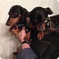 Adopt A Pet :: SADIE & ROCCO - Portland, OR