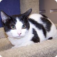 Adopt A Pet :: K-Psyche1-Maxine - Colorado Springs, CO