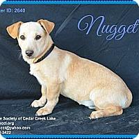 Adopt A Pet :: Nugget - Plano, TX