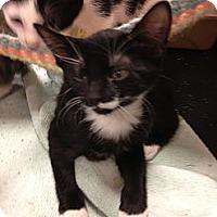 Adopt A Pet :: Lila - Fort Lauderdale, FL