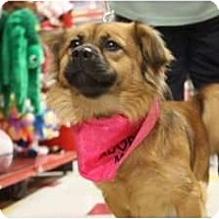 Adopt A Pet :: Sierra - Arlington, TX
