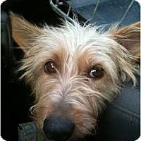Adopt A Pet :: Little Miss