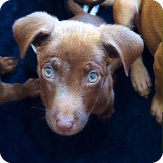 Rescue Dogs For Adoption Memphis Tn