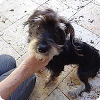 Adopt A Pet :: Minnie - Ocean Ridge, FL