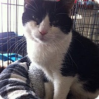 Adopt A Pet :: Tenille - Orillia, ON