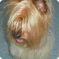 Adopt A Pet :: Raymond - geneva, FL