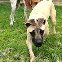 Adopt A Pet :: Faye - O'Fallon, MO
