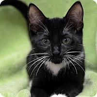 Adopt A Pet :: Justine151440 - Atlanta, GA