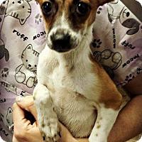 Adopt A Pet :: Misty - Kimberton, PA