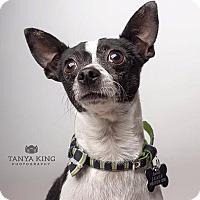 Adopt A Pet :: Spanky - Pitt Meadows, BC