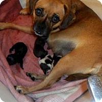 Adopt A Pet :: Jemma - Aurora, CO