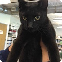 Adopt A Pet :: Parker - McHenry, IL