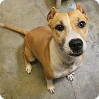 Adopt A Pet :: Jasmina - Hilton Head, SC