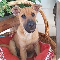 Adopt A Pet :: Charla - New Oxford, PA