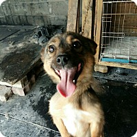 Adopt A Pet :: Kwan - Fairfax, VA