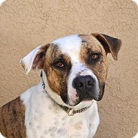 Adopt A Pet :: Gavin - Newport Beach, CA