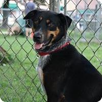 Adopt A Pet :: Kamie - Northbrook, IL