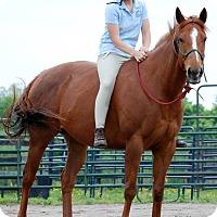 Adopt A Pet :: Godiva - Nicholasville, KY