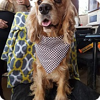Adopt A Pet :: Oliver - San Diego, CA