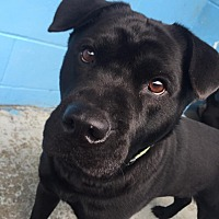 Adopt A Pet :: Sissy - Joplin, MO