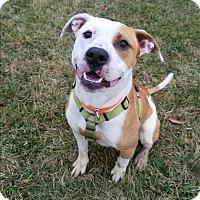 Adopt A Pet :: Obi - Delaware, OH