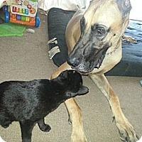 Adopt A Pet :: Endora - Byron Center, MI