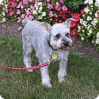Adopt A Pet :: Fritz - Rigaud, QC