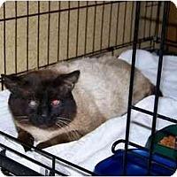 Adopt A Pet :: Sampson - Syracuse, NY