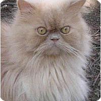 Adopt A Pet :: Horton - Davis, CA