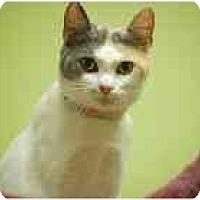 Adopt A Pet :: Ally - Marietta, GA
