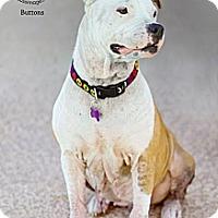 Adopt A Pet :: BUTTONS - Phoenix, AZ