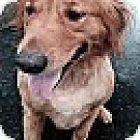 Adopt A Pet :: Tucker - Windam, NH