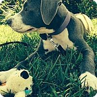 Adopt A Pet :: MAREENA - Torrance, CA
