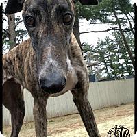 Adopt A Pet :: Roxanne - Swanzey, NH